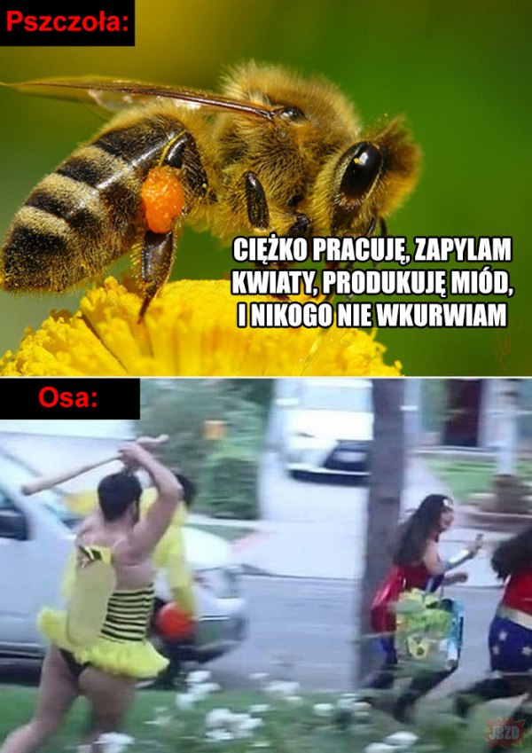 Pszczoły vs osy