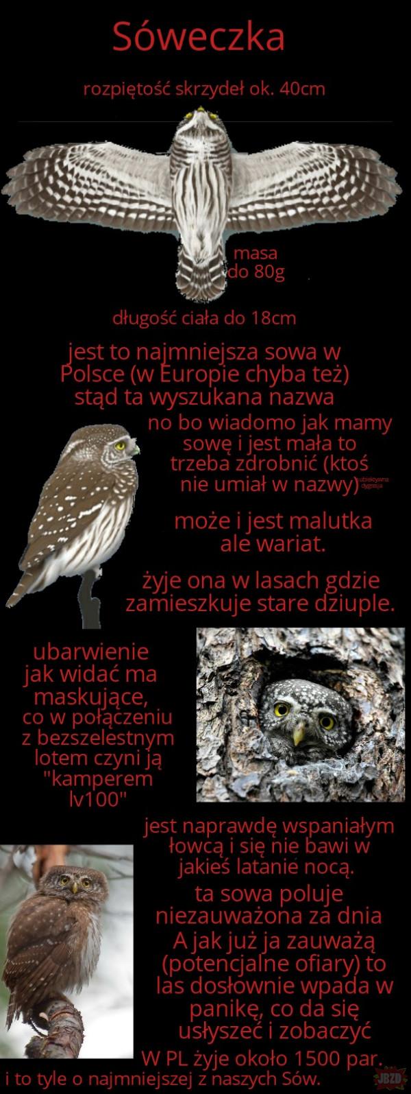 Najciekawsze ptaki w Polsce cz.8