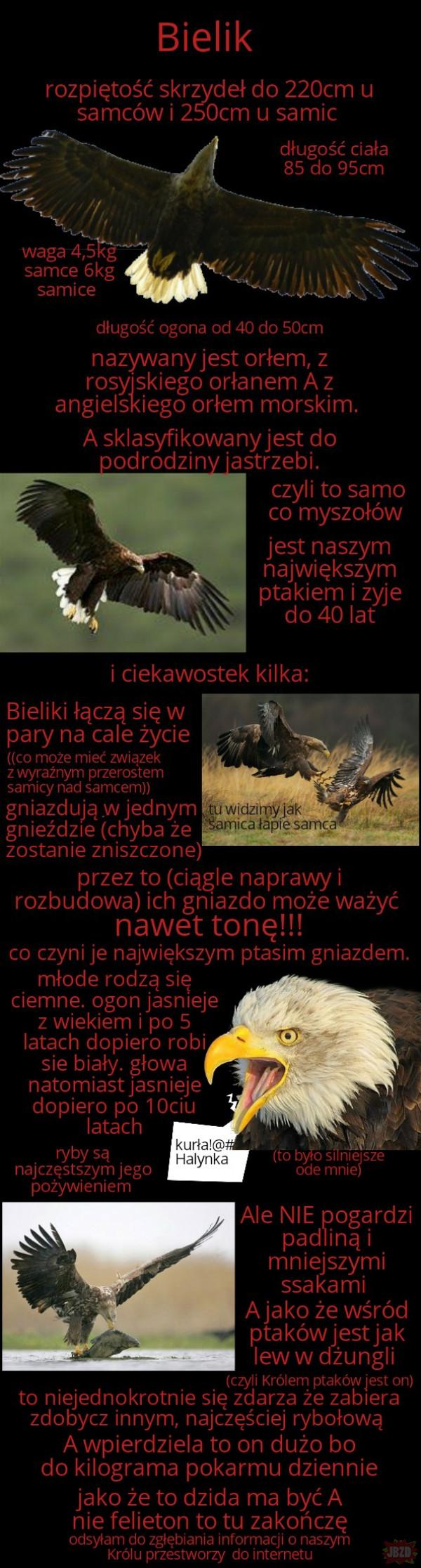 Najciekawsze ptaki w Polsce cz.6 (ta właściwa)