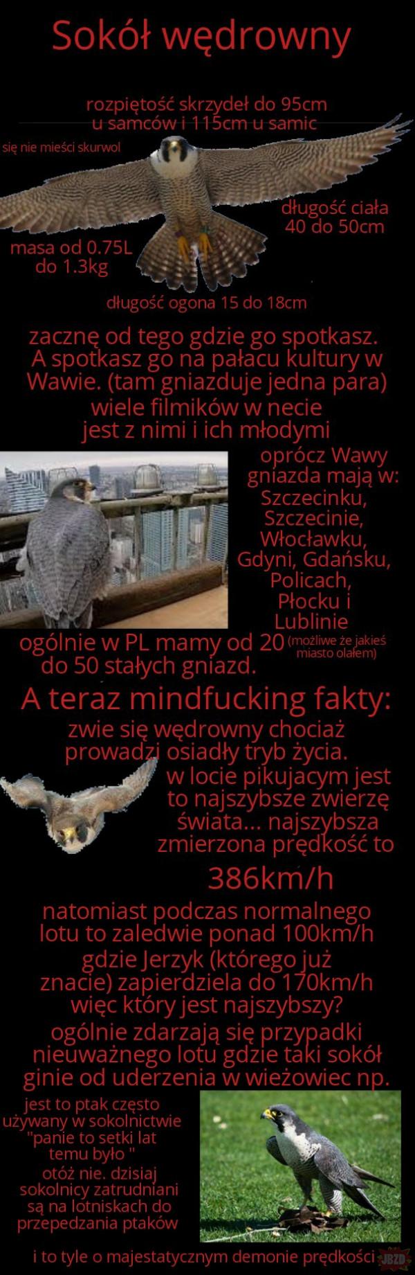 Najciekawsze ptaki w Polsce cz.7
