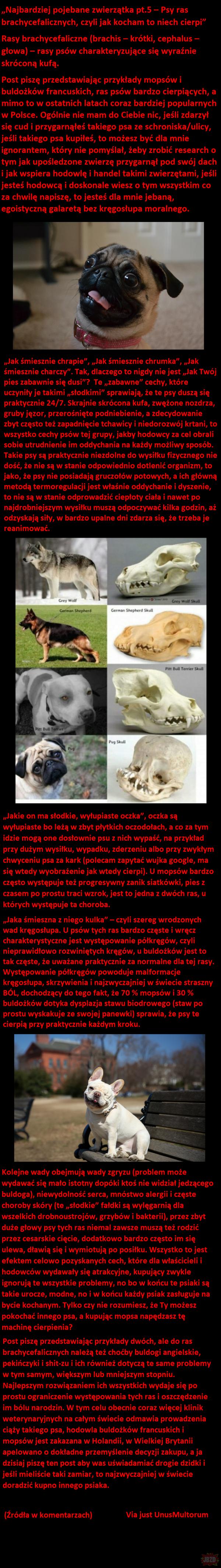 Cykl najbardziej pojebane zwierzątka część 5