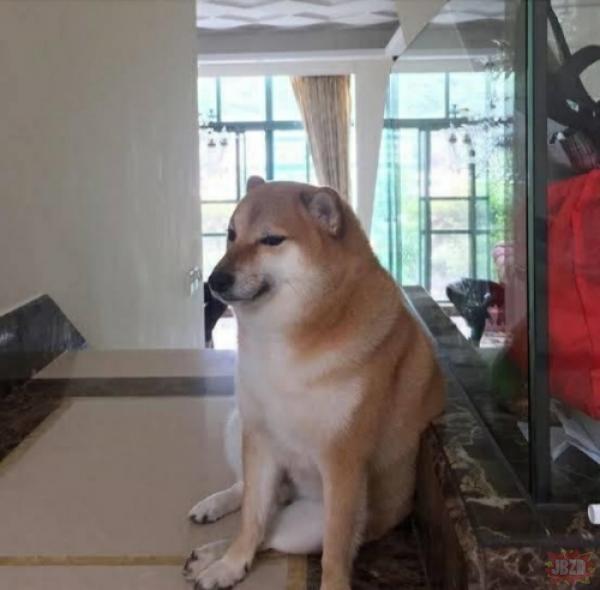 Zapewne nie każdy z was wie jak wygląda oryginalne zdjęcie tego psa