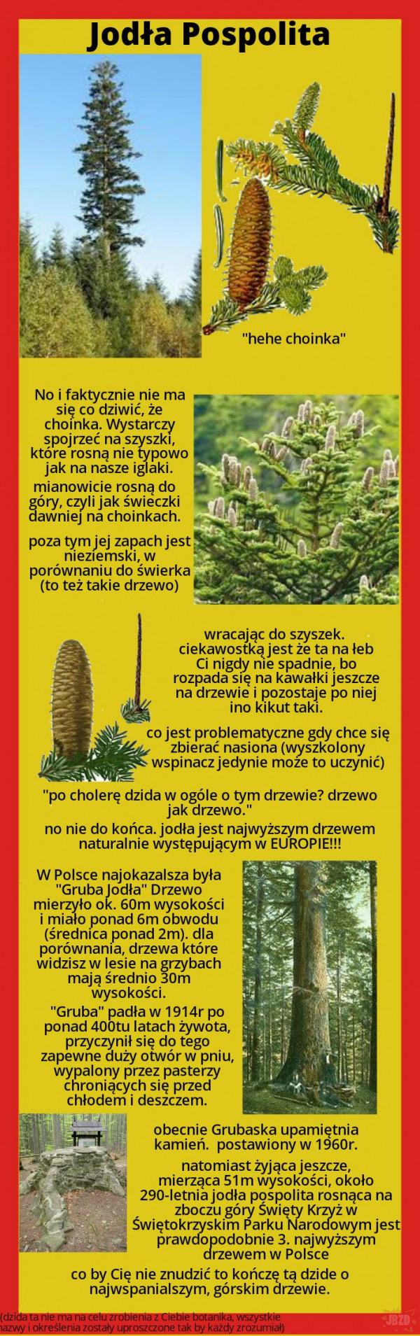 Najciekawsze rośliny w Polsce cz.1 (w tym tygodniu)