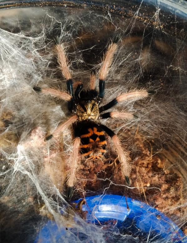 Poniedziałkowy pająk