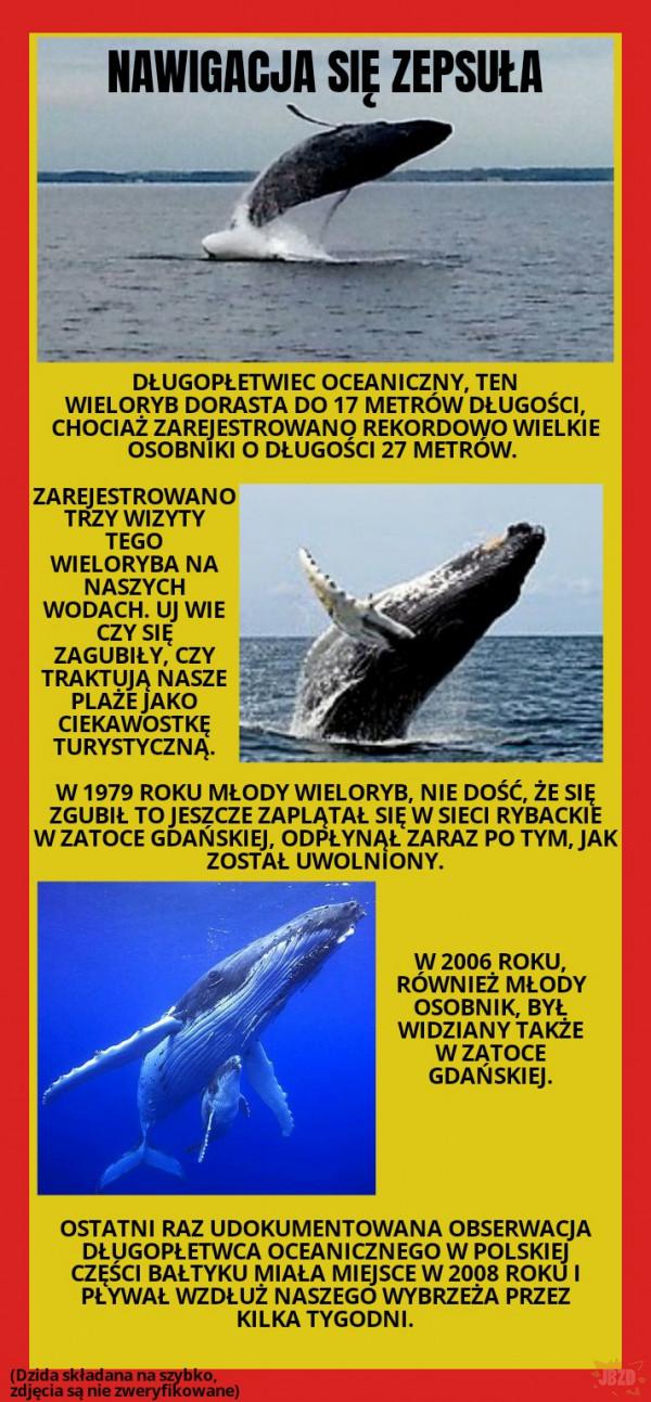 """Najciekawsze zwierzęta w Polsce???? """"Przejazdem"""""""