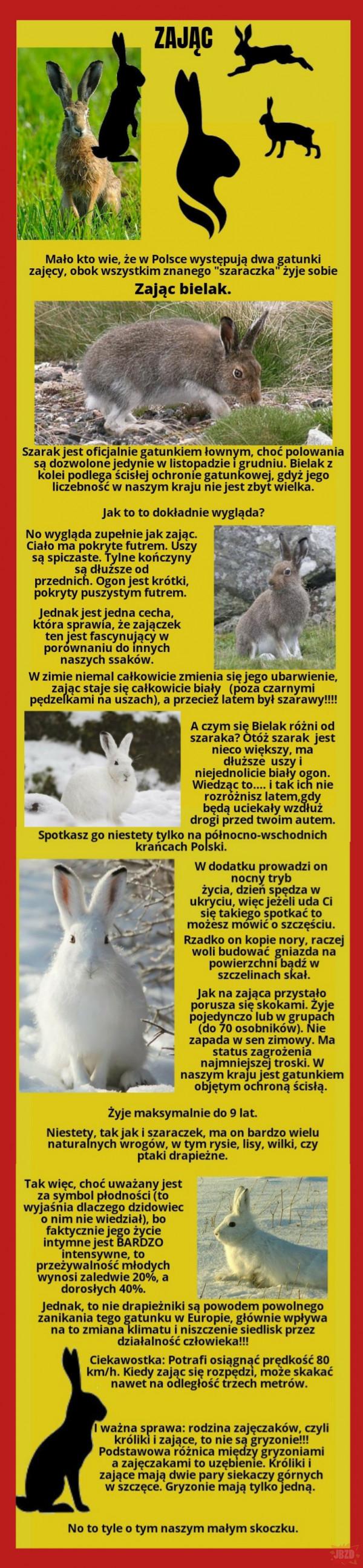Najciekawsze zwierzęta w Polsce....