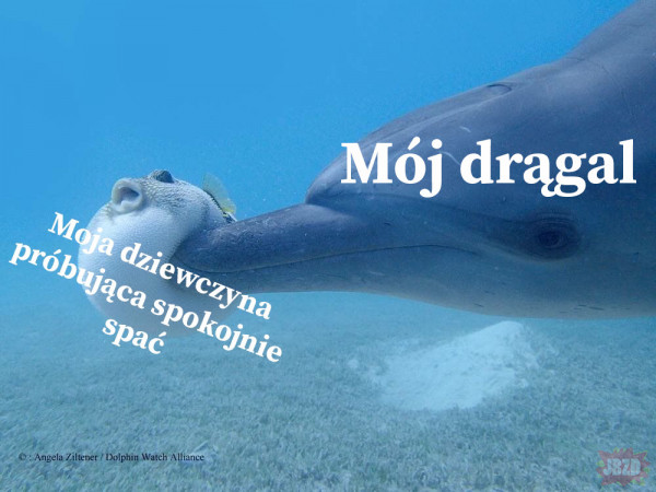 Drągal