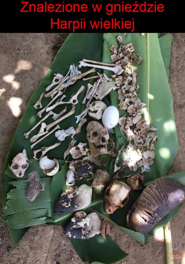 Sporo kości!