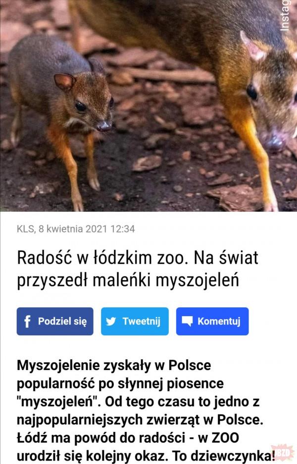 Dobre wieści! Mały myszojeleń!