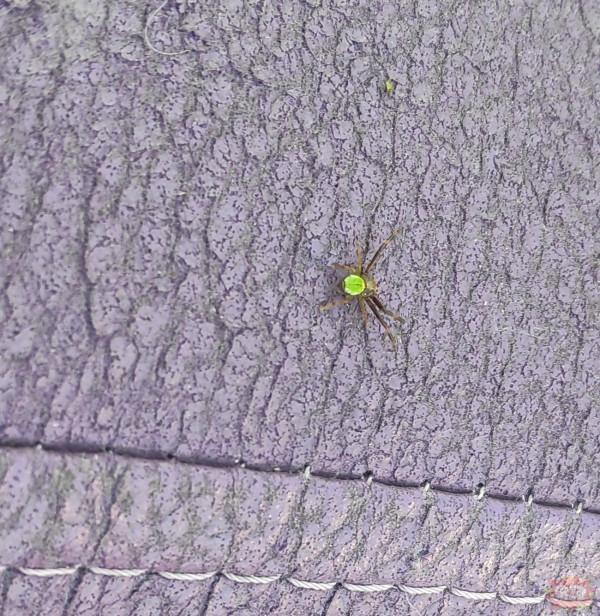 Piękny pajączek