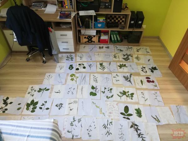 Mój stary fanatyk botaniki