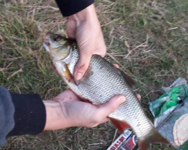 Czasami warto jechać na rybki