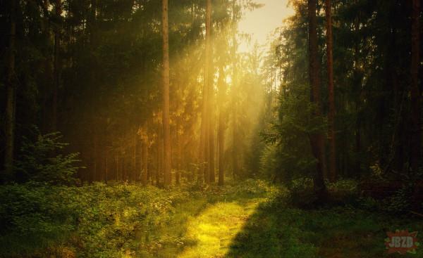Leśne podróże